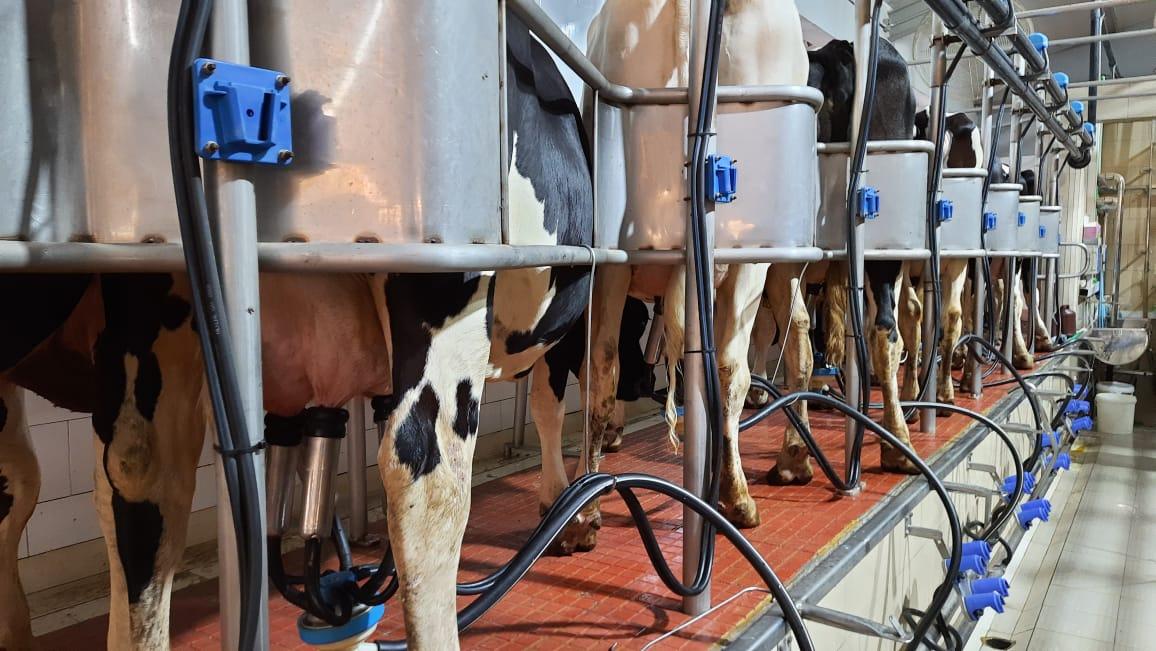 dairy farm 3